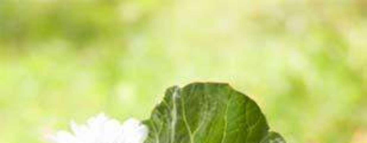 Verduras. El tomate, pepino, lechuga, zanahoria, espinaca y acelga cocidas, berenjenas y espárragos contribuyen a bajar el abdomen. Evita el repollo, las coles (coliflor, brócoli y las papas que producen hinchazón.