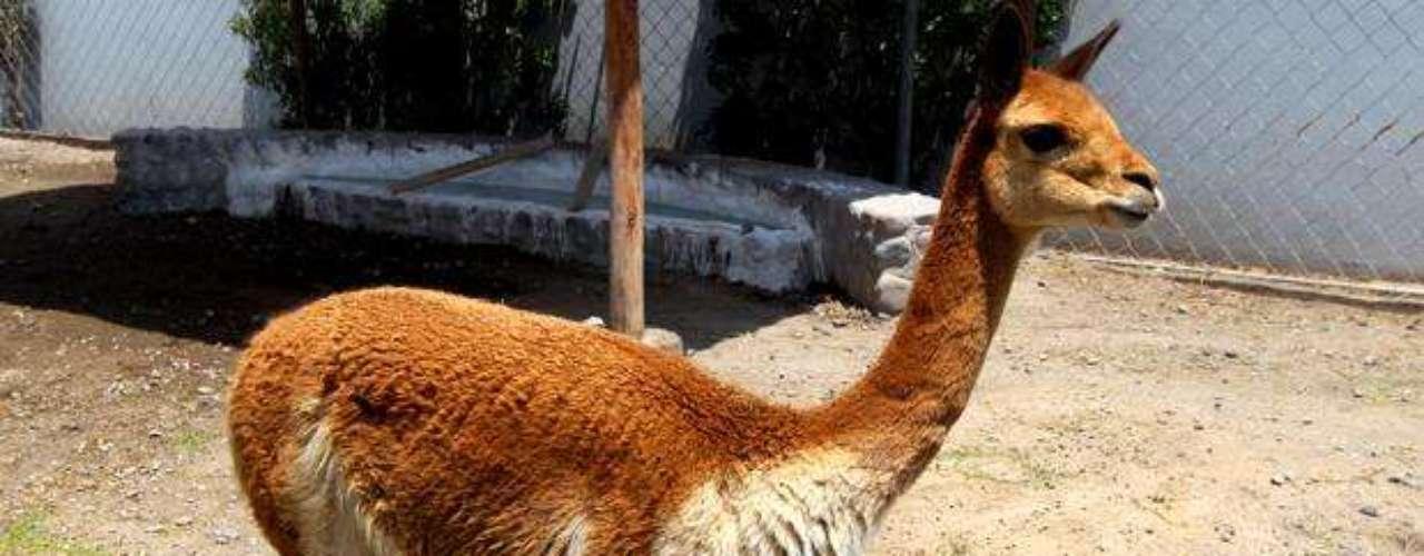 Desde el siglo XX ha desarrollado industrias relacionadas con el sector primario como la de lana de alpaca y agroindustria, constituyendo un centro de cambio e intermediación en el sur andino sirviendo de nexo entre la costa y la sierra.