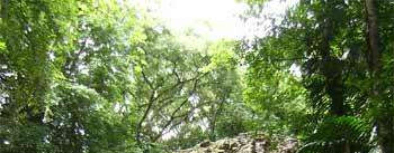 3. Yaxchilán. Se trata de un centro ceremonial instalado en plena selva. Este atractivo también la dota de una intensa vegetación y fauna que incluye monos, pájaros y reptiles.