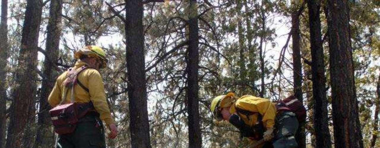 Más de 1.200 bomberos fueron destacados cerca de la frontera con Arizona para apagar el fuego.