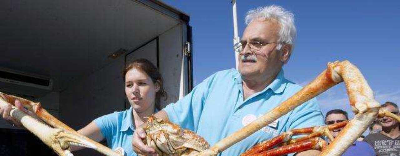 El cangrejo más grande, de la especie Macrocheira kaempferi, puede ser encontrado en Japón.