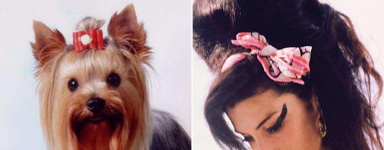 Amy Winehouse siempre desató la polémica a su alrededor pero en materia de talento dejó un gran legado musical antes de su muerte el 23 de julio de 2011. El Yorkshire podría ser la réplica perruna de la creadora del disco \