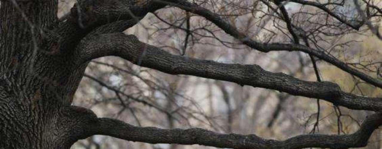 Otra imagen captada en el Central Park de NY.