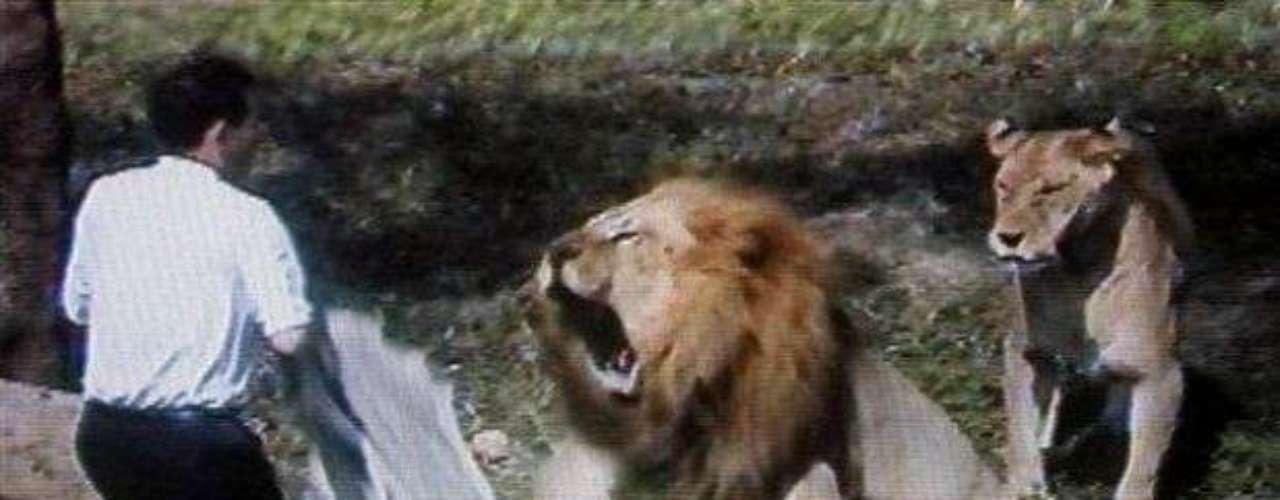 Este ataque sucedió hace algunos años en el zoológico de Taipei, en Taiwán. El hombre saltó sorpresivamente a la jaula del animal y gritó \