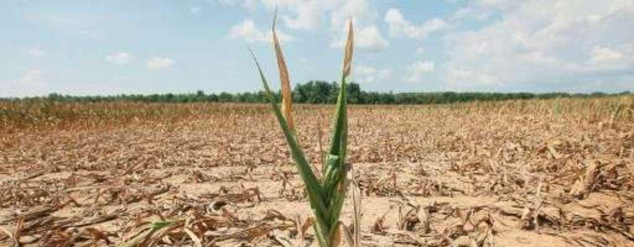 Sin embargo, Vilsack aseguró que la demanda de etanol no es un problema en estos momentos.