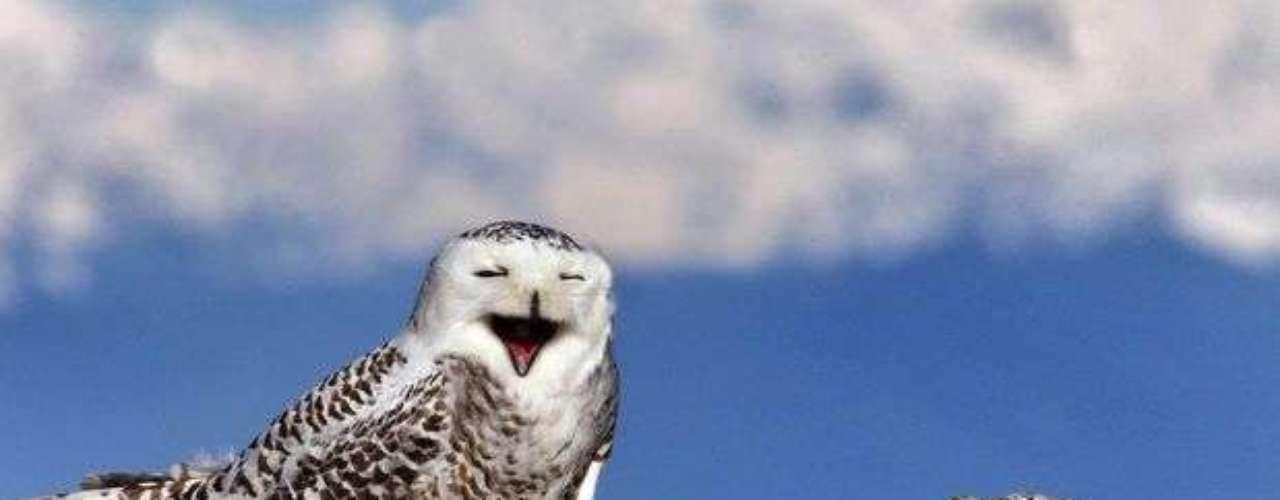 Esta ave que aparentemente está sonriendo, está en realidad bostezando. Fue captada en Washington.