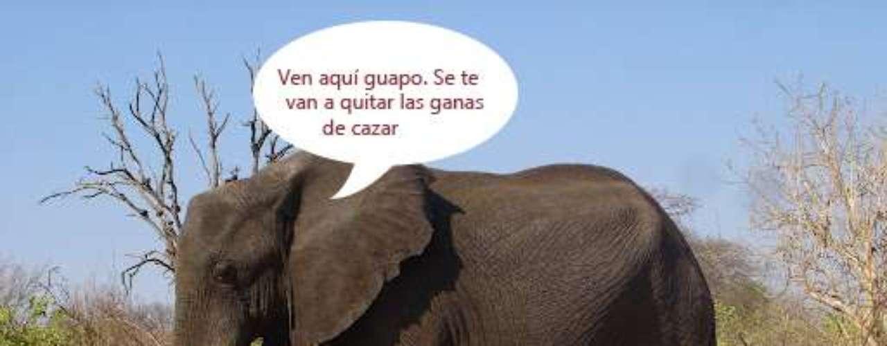 Elefantes, de víctimas a victimarios.