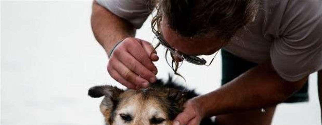 La relación entre Unger y su perro Shoep comenzó hace 19 años, cuando era sólo un cachorro de 8 meses.
