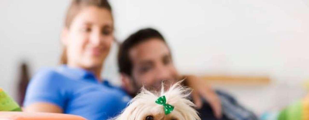 Te ha dicho que quiere compartir más cosas. Además de compartir una cama, pasatiempos y otros placeres, una señal puede ser la sugerencia de tener un perro u otro animal doméstico, o abrir una cuenta bancaria conjunta.