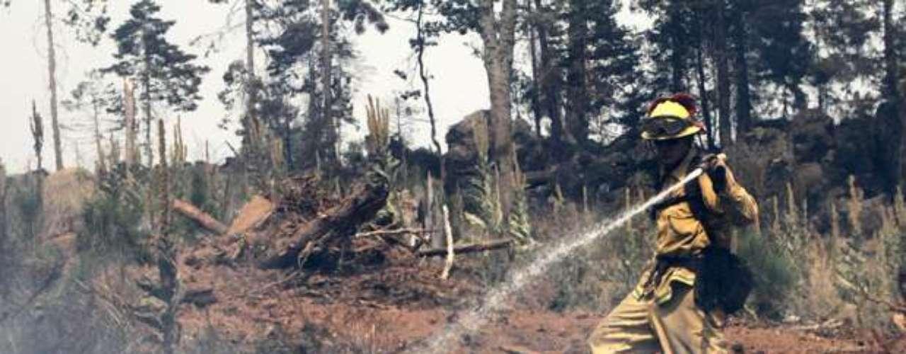 Casi 1,900 bomberos luchaban para sofocar los incendios sobre la zona escarpada cubierta de densa vegetación que amenazaban unas 3.500 viviendas en pueblos remotos como Shingletown, Manton y Viola, 274 kilómetros (170 millas) al norte de Sacramento.