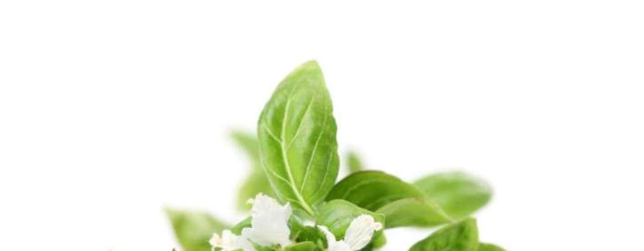 Albahaca: la hierba, popularmente usada en la cocina italiana, puede ayudar a combatir la ansiedad e incluso curar infecciones bacterianas en la piel. Estudios en animales también sugieren que puede desempeñar un papel antioxidante, antiinflamatorio y analgésico.