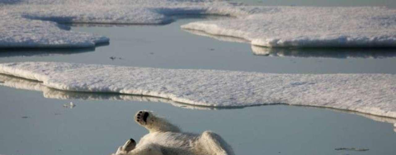 Durante el encuentro, en el que intervinieron media docena de expertos, se presentaron análisis e imágenes captadas por satélite que evidencian cómo la extensión de los glaciares del Ártico ha disminuido un 13 % desde 1979 a 2012, lo que supone más de cuatro millones de kilómetros de extensión.