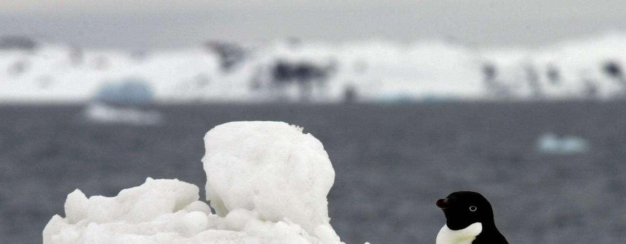 Bien pasada la medianoche de la Antártida, cuando el frío es intenso, Maksym describe en una rara llamada telefónica de barco a tierra desde el R.V. Aurora Australis lo que significa el hielo extra en términos de cambio climático. Y lo que es estar estudiándolo durante dos meses, a 2.414 kilómetros (1.500 millas) de la ciudad más cercana.