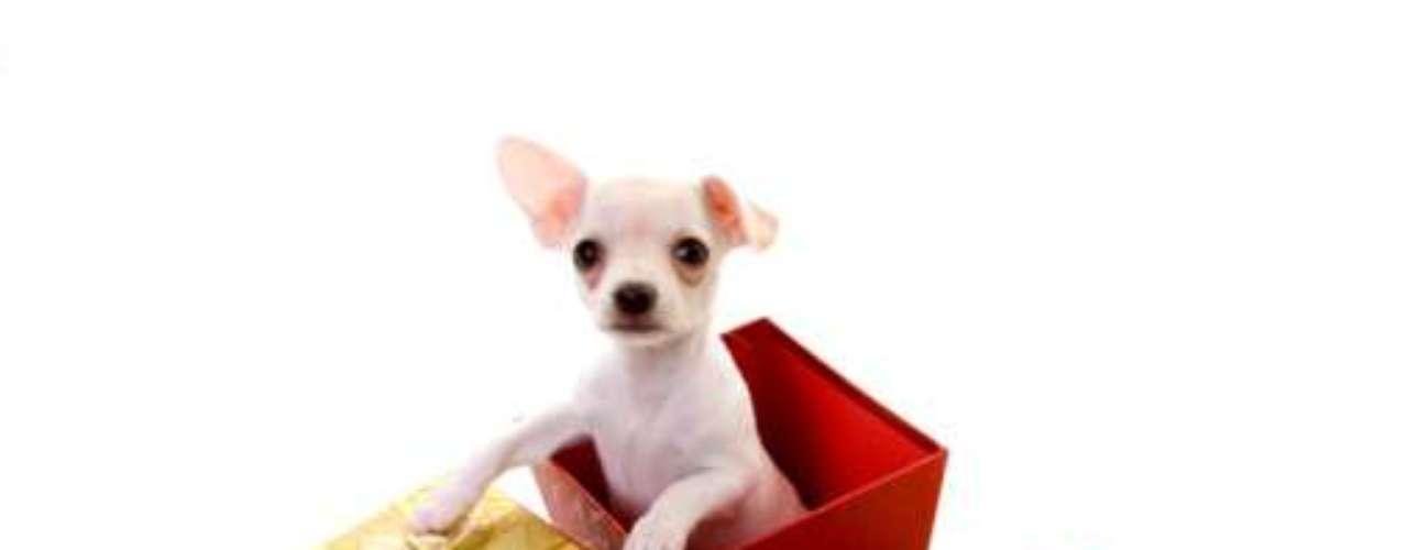 Mascotas: aunque mueres porque tu chico tenga un perrito, si no lo tiene es por algo.