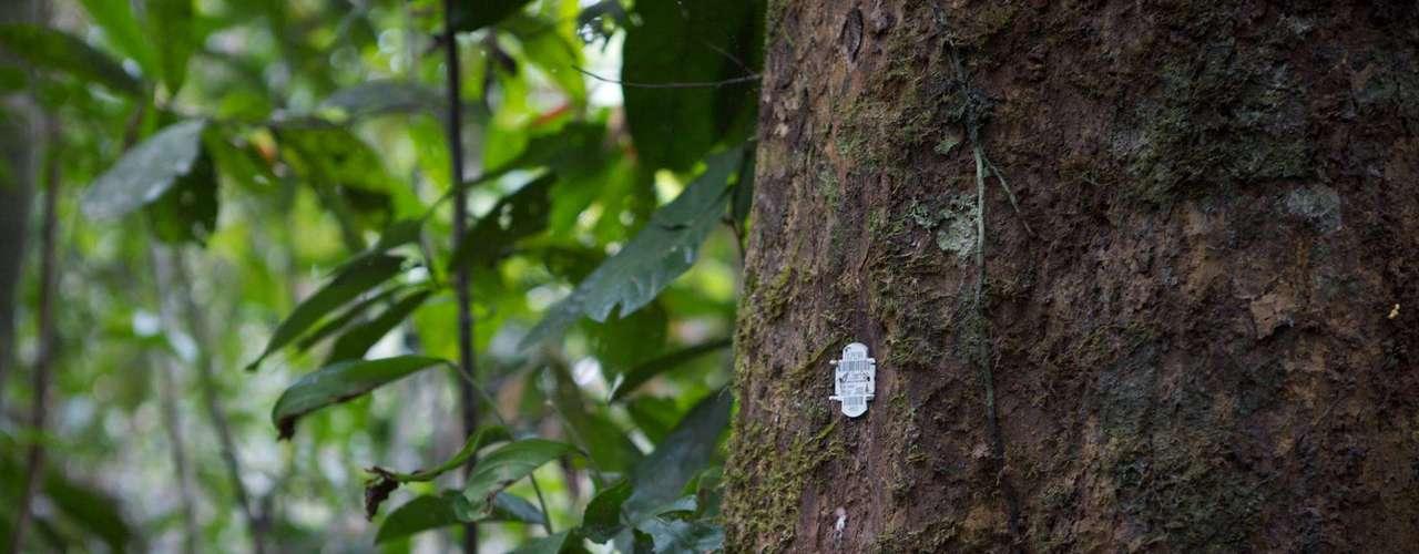 En febrero de 2012, científicos de la Universidad de Exeter en el Reino Unido descubrieron que algunas plantas se comunican entre sí, lo que los expertos han considerado como una forma de hablar. La BBC emitió un documental relacionado a esta materia en el que se observa cómo algunas plantas no solo activan una toxina para disuadir a los herbívoros, sino que también advierten a otras que las están atacando a través de las emisiones de gas.