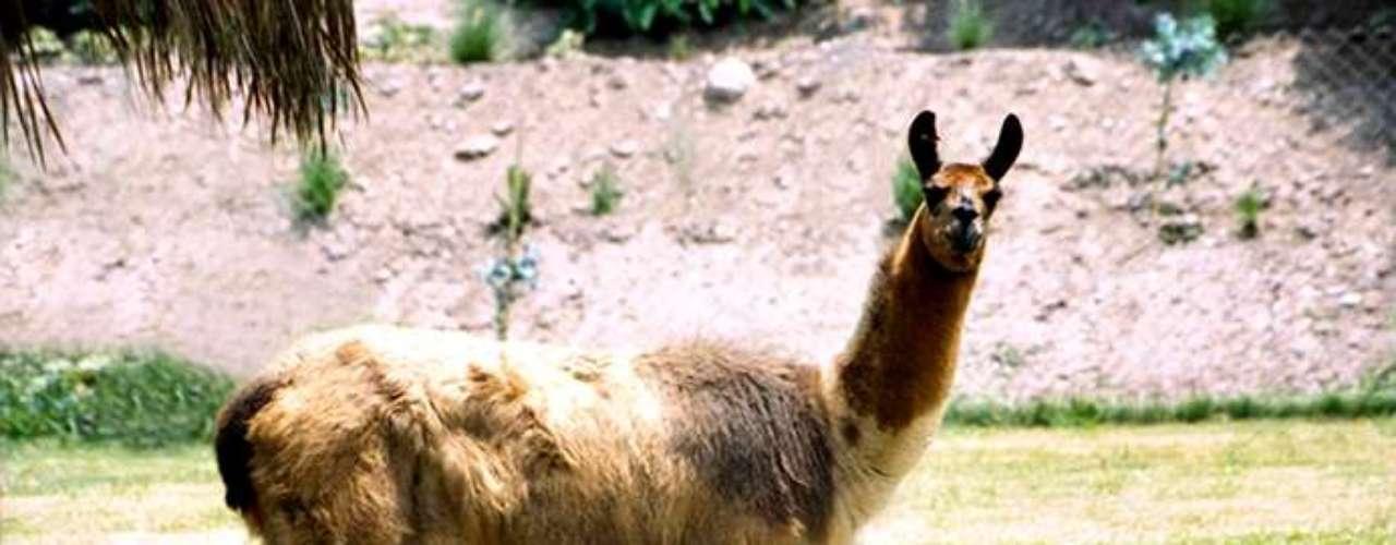 Parque de las Leyendas, el primer zoológico de Perú, es una muestra de por qué este país es conocido por su gran diversidad biológica.