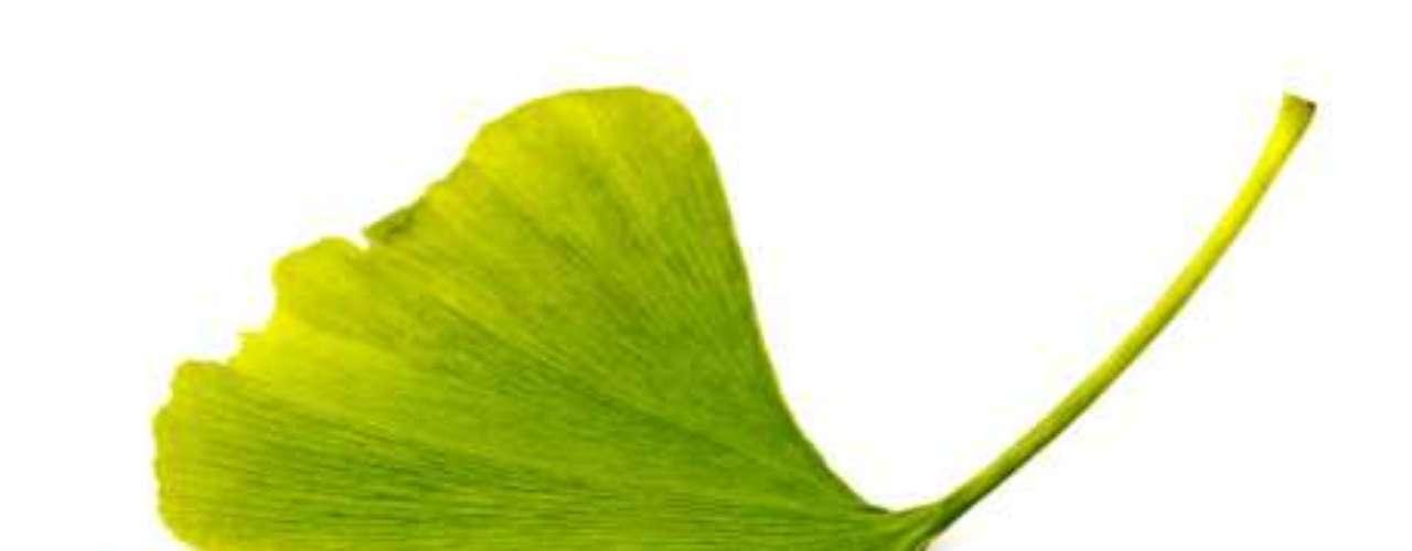 Ginkgo biloba: altas dosis de esta sustancia afecta la acción de los fármacos utilizados para el tratamiento de convulsiones.