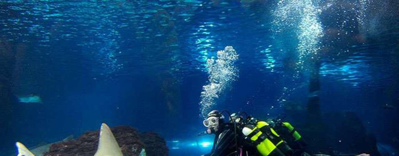 3 - Un valiente turista desafió a un tiburón: Un turista galés se convirtió en un héroe después de agarrar por la cola y arrastrar mar adentro a un tiburón que nadaba cerca de unos niños en una playa australiana. Paul Marchallsea, de 62 años, se acercó a la orilla tras oír gritos de \