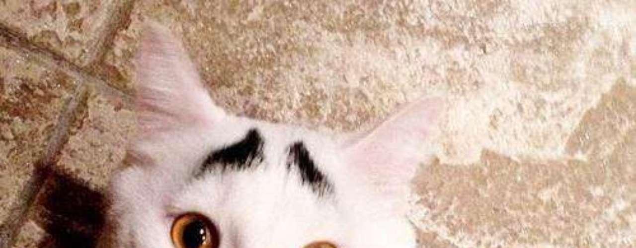 Este gato se convirtió en el felino más famoso del momento en la web por sus atípicas cejas. Su dueño lo adoptó tras encontrarlo en la calle para generar conciencia acerca de la adopción de animales. Pero sus manchas en la frente, que parecen cejas humanas, lo convirtieron en un gato muy popular.