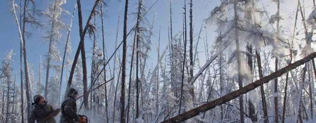 Alexey Egorov, 25, and Semion Vinokurov, 53, cut a tree in the forest outside the town of Tomtor.