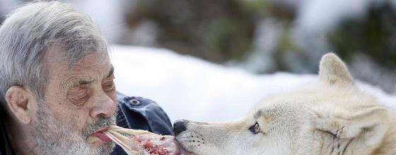 En el parque Freund alberga 29 lobos de seis razas diferentes.
