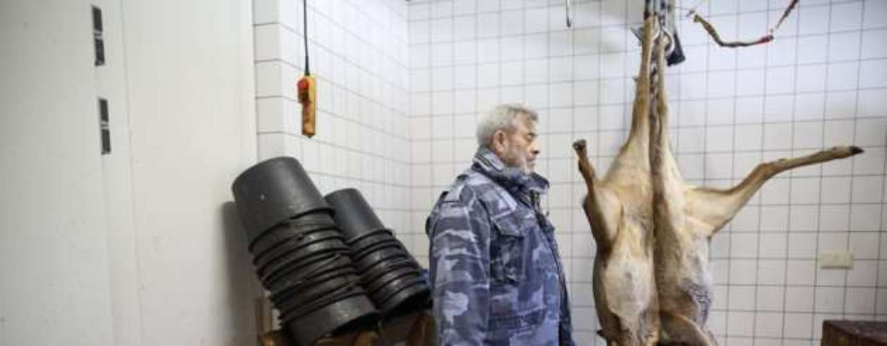 Por eso, se ve Werner Freund aquí junto a cadáveres colgados de ciervos en el Wolfspark en Merzig, Alemania, sin temer un ataque de sus lobos.