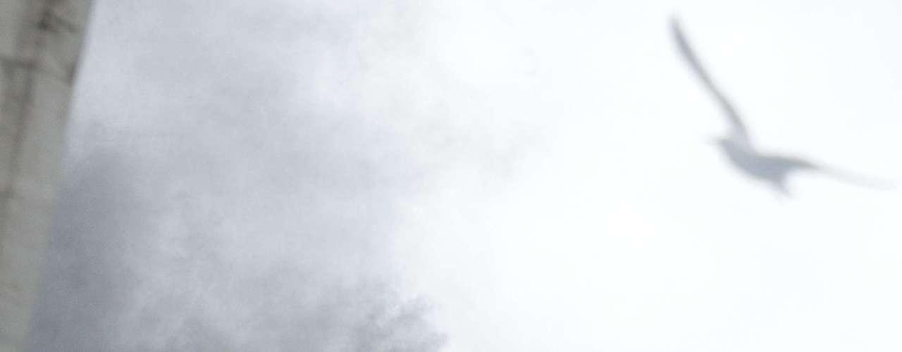 La gaviota en la chimenea amenizó la espera de los fieles en la plaza de San Pedro.