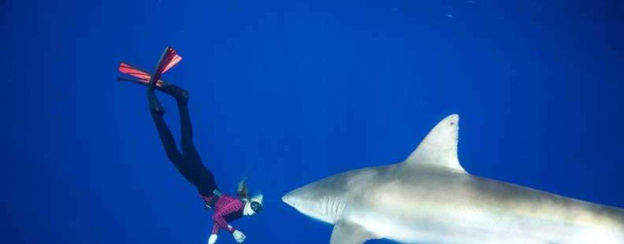 Ocean Ramsey tiene 27 años y además de ser modelo también es profesora de buceo. Desde hace cuatro años tomó en sus manos la labor de demostrar que los tiburones no son las temibles criaturas que el cine nos ha mostrado. Es por este que continuamente se sumerge con ellos en diversas partes del mundo para que la gente se interese en conocer un poco más acerca de esta especie.