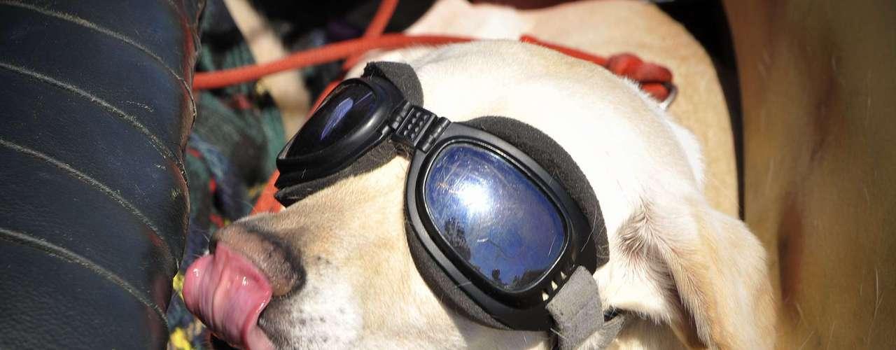 Un ejemplo es Doggles que comercializa lentes de sol para perros, además de otros accesorios como back packs, botitas, sombreros. El negocio resultó ser todo un éxito a pesar de que no es común ver a perros con lentes para el sol. Para sus críticos fue una sorpresa que se convirtiera en una empresa millonaria.