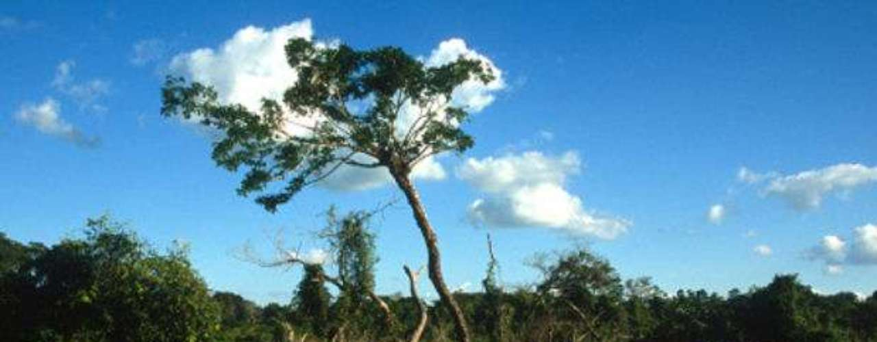 Amazonía.  Llamado el pulmón del planeta, la Amazonía sufre las consecuencias de la deforestación desenfrenada y podría terminar con la mitad de sus 6 millones de kilómetros cuadrados para el 2030.