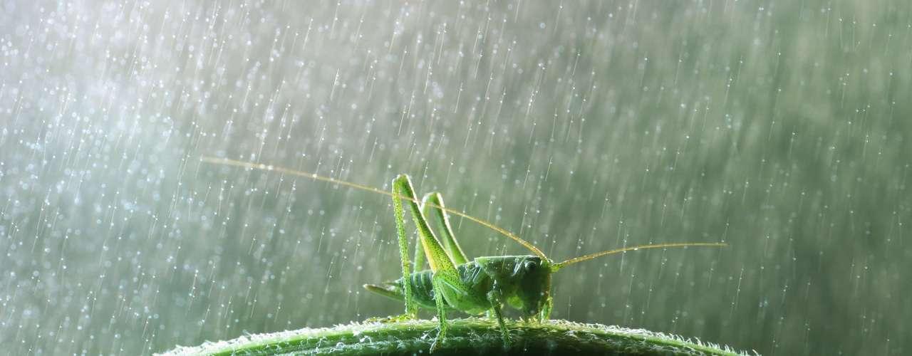 El ruso Vadim Trunov ha realizado una serie de registros que muestran cómo los insectos y otros pequeños animales enfrentan la lluvia.