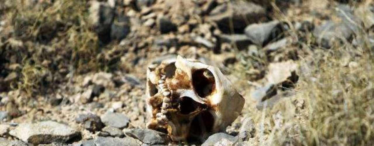 Detenidos o muertos: Ignacio Coronel, \