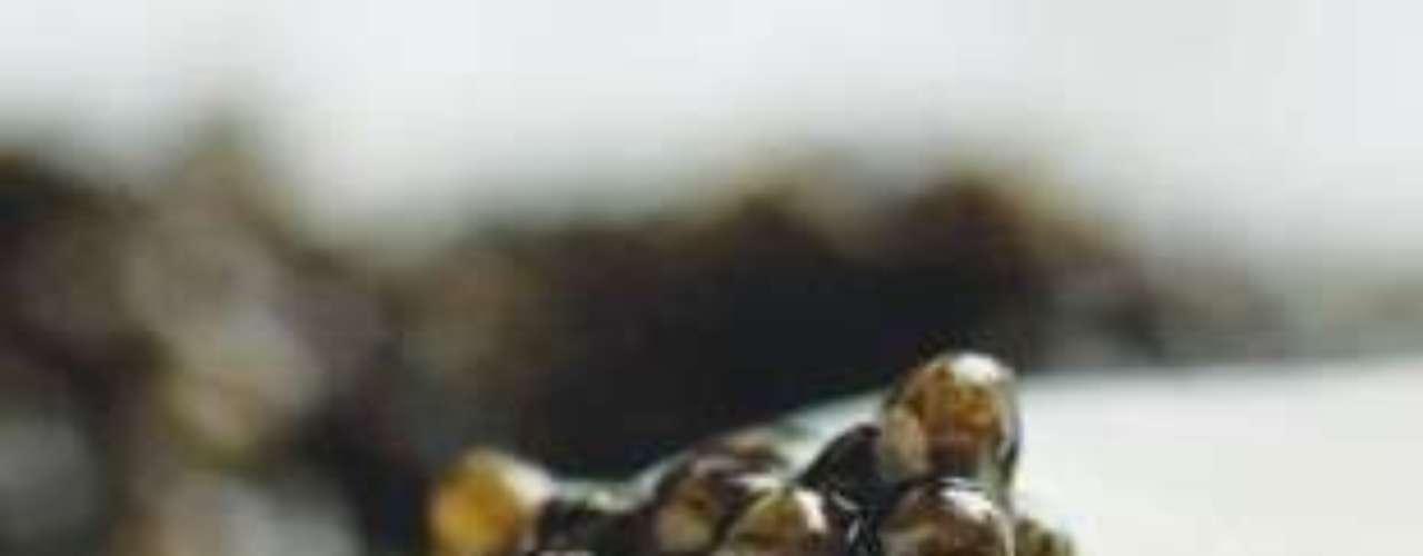 Caviar Almas. La variedad más fina de este caviar (imperial beluga) cuesta 1,437.49 dólares por cada 30 gramos. Sus huevas son obtenidas de esturiones salvajes del Mar Caspio.
