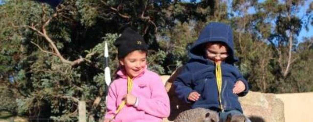 El zoológico de Wellington es otro de los atractivos que ofrece la ciudad.