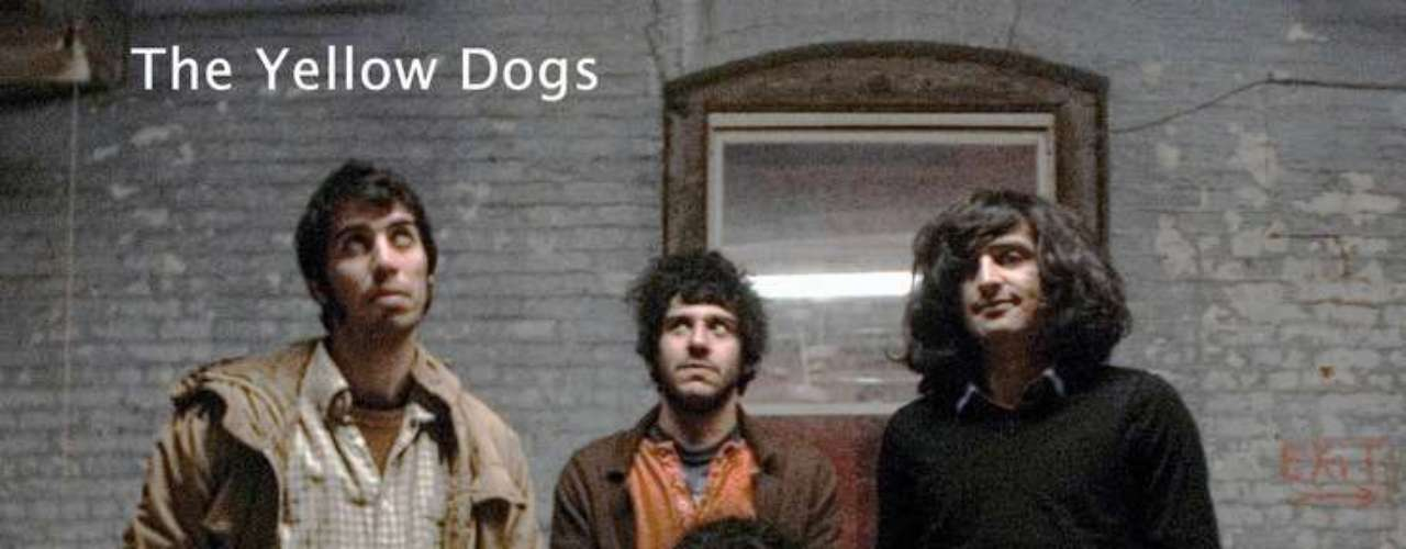 El tabloide local Daily News informó que tanto el agresor  como las víctimas eran miembros de la banda de rock alternativo de origen iraní The Yellow Dogs.
