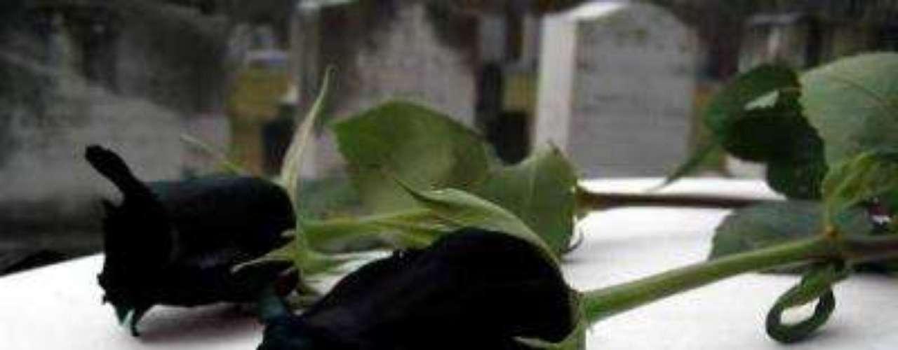 Rosa negra. De por sí regalar flores es difícil. Tienes que saber cuál es su favorita y dónde se las darás para que se conserven bonitas por más tiempo. Pero una rosa negra no es una buena opción, para nada.