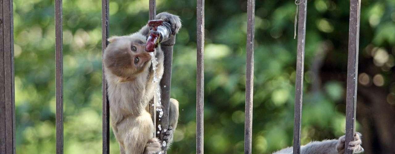EL TEMPLO DEL MONO: Un lugar que resulta interesante por su extraña relación del mundo salvaje y el hombre.Asentado en las afueras de Jaipur en Rajasthan, India, es un sitio con siete tanques de baño alimentados por manantiales naturales y tribus de monos macacos y langures, que escalan la estructura de piedra, y que residen en recintos sagrados.