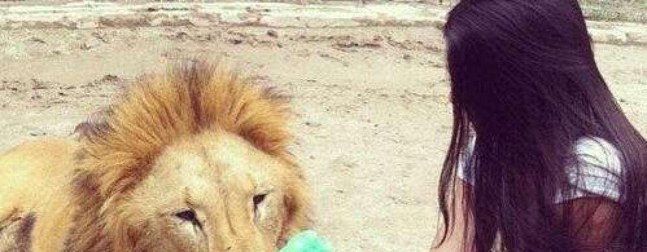 Una de sus amigas junto a un león.