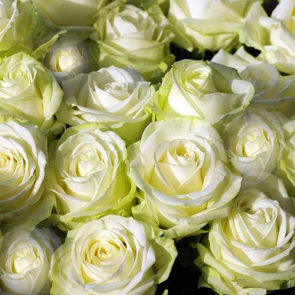 Baño Sencillo Para Atraer El Amor:San Valentín: haz un ritual con rosas para atraer el amor a tu vida