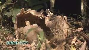 Corpo do dono da perna encontrada pelo cachorro é localizado Video: