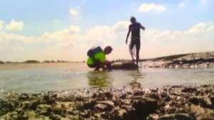 Homens salvam ovelha atolada em praia da França Video: