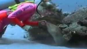 Mergulhadora faz amizade com moreia em aquário na Flórida Video: