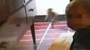 Vídeo de suposto duende na Argentina vira piada na web Video: