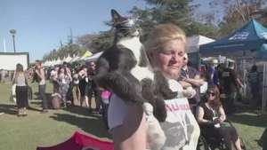 Gato com óculos 'estilosos' chama atenção em festival Video: