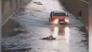 Homem resgata cadela presa em rio  Video: