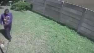 Toma! Cachorrinho minúsculo põe ladrão para correr Video: