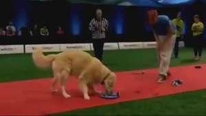 A gente perdoa! Cão falha em competição de obediência Video: