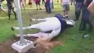 Choque mata égua e mostra risco para torcidas de Santos e SP Video: