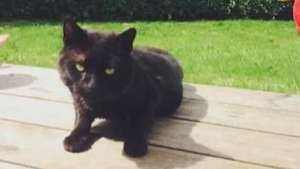 Gato usado como 'alvo' sobrevive a duas saraivadas de chumbo Video:
