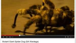 Vídeo com cão fantasiado é o mais visto no YouTube em 2014 Video:
